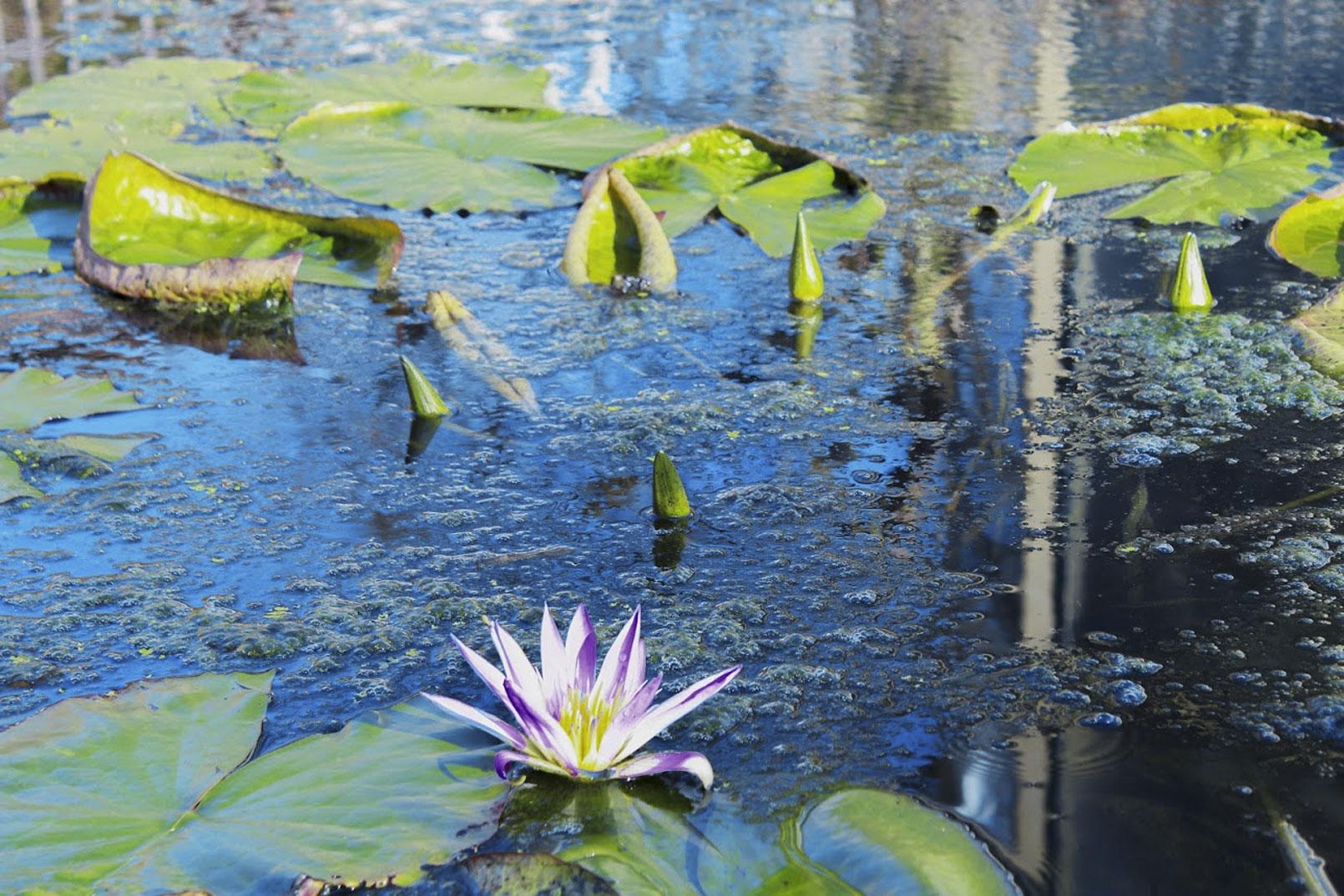 Padua-The-Botanical-Garden 1